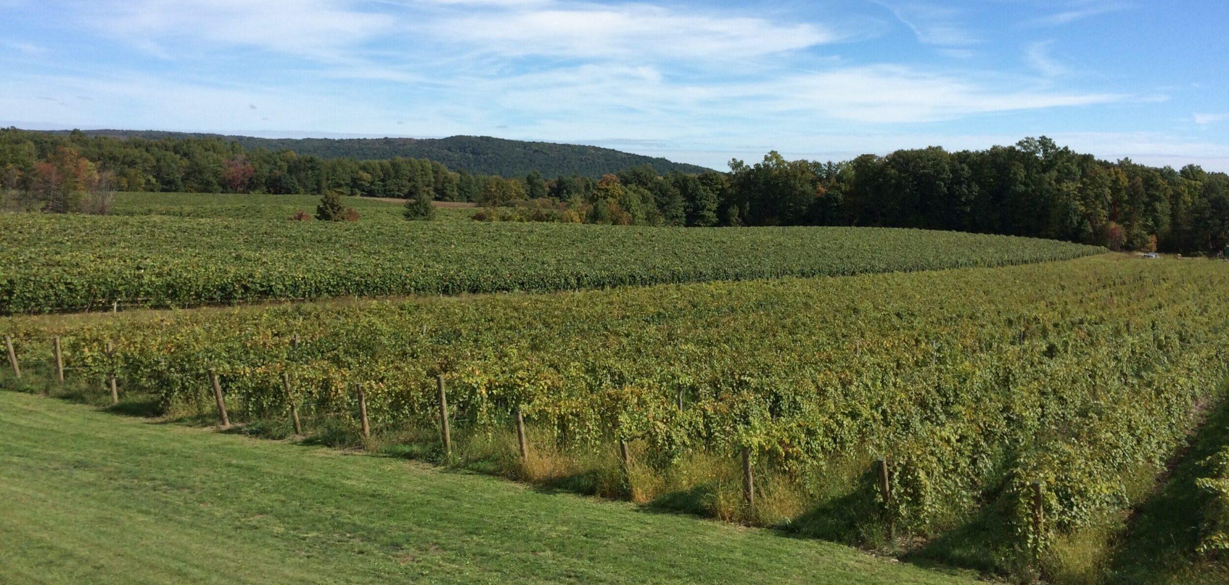 Branchport Winery